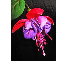The folds of the Fuchsia  Photographic Print