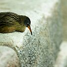 Shore Bird at Rest by Sam Brody