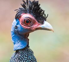 Guinea Punk by Peter Denness