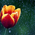 Tulip Rain by Bobby McLeod