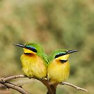 Unity (Little Bee Eaters) by Steve Bulford