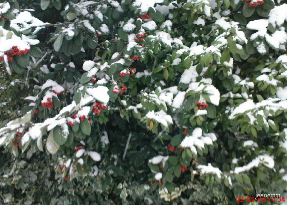 Snow on a Bush by jeanemm