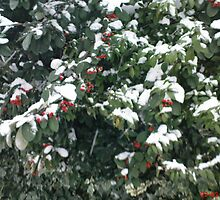 Snow on a Bush by jeanemm
