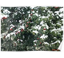 Snow on a Bush Poster