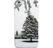 The fir tree iPhone Case/Skin