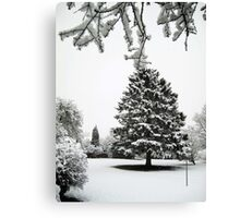 The fir tree Canvas Print