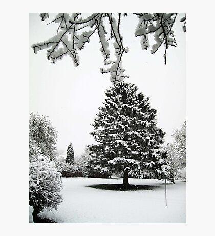 The fir tree Photographic Print