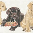 Labrador Puppies by BarbBarcikKeith
