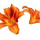 Orange Lilies by jojobob