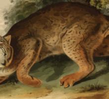 James Audubon - Quadrupeds of North America V1 1851-1854  Common American Wild Cat Sticker