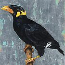 bird 5 - Myna by Joe Helms