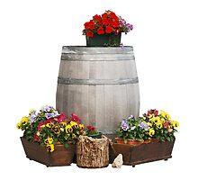 Pansies and Wooden Barrel by jojobob