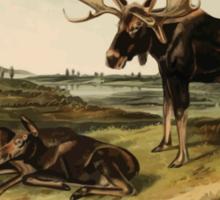 James Audubon - Quadrupeds of North America V2 1851-1854  Moose Deer Sticker