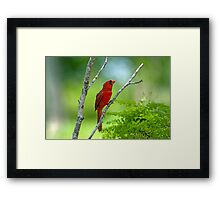Precious Moment in May Framed Print