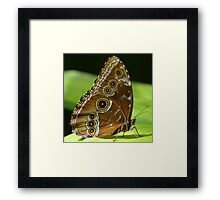 Beautiful Butterfly Wings of Meadow Brown Framed Print