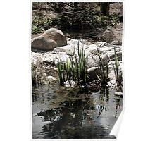 Pond Scum Poster