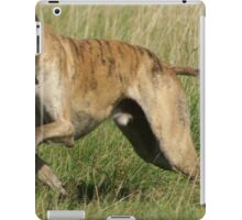 Well-trained Chow Chow (Smooth)
