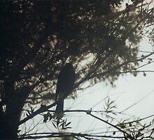 bird by John Douglas