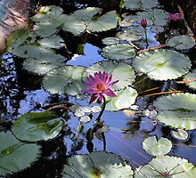Hemingway Garden by Will Harper