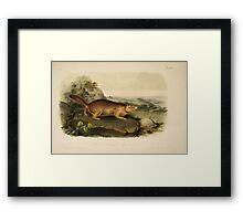James Audubon - Quadrupeds of North America V1 1851-1854  Parry's Marmot Squirrel Framed Print