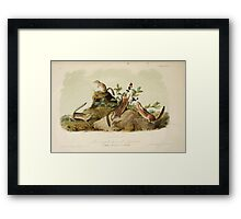 James Audubon - Quadrupeds of North America V1 1851-1854  Four Striped Ground Squirrel Framed Print