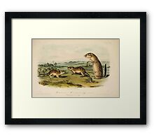 James Audubon - Quadrupeds of North America V3 1851-1854  Mexican Marmot Squirrel Framed Print