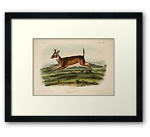 James Audubon - Quadrupeds of North America V3 1851-1854  Long Tailed Deer Framed Print