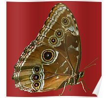 Beautiful Butterfly Wings of Meadow Brown Isolated Poster