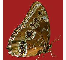 Beautiful Butterfly Wings of Meadow Brown Isolated Photographic Print