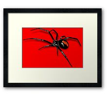 Redback Spider Black Widow Framed Print