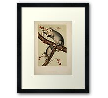 James Audubon - Quadrupeds of North America V2 1851-1854  Virginian Opossum Framed Print