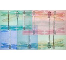 sheer dragonfly Photographic Print
