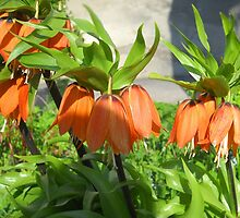 Spring Flowers by Vitta