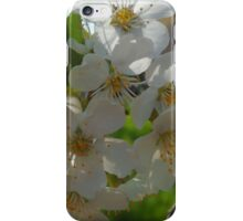 Blossom A iPhone Case/Skin