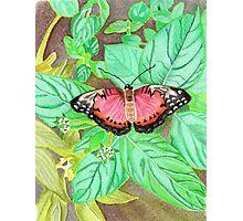 Eve's garden Photographic Print