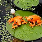 floating frogs by robmac