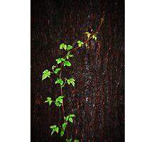 Life Crawling Photographic Print