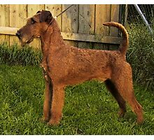 Cool Soft Coated Wheaten Terrier Photographic Print