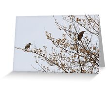 Green Herons  Greeting Card
