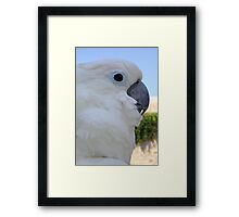 Side Portrait Of A Blue-Eyed Cockatoo Framed Print
