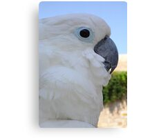Side Portrait Of A Blue-Eyed Cockatoo Canvas Print