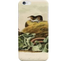 James Audubon - Quadrupeds of North America V2 1851-1854  Jay's Least Shrew iPhone Case/Skin