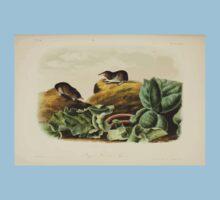 James Audubon - Quadrupeds of North America V2 1851-1854  Jay's Least Shrew Kids Tee