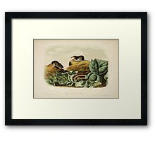 James Audubon - Quadrupeds of North America V2 1851-1854  Jay's Least Shrew Framed Print