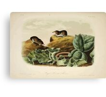 James Audubon - Quadrupeds of North America V2 1851-1854  Jay's Least Shrew Canvas Print