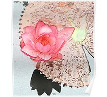 crayon color sketch pink waterlily flower and its big floating leave Poster