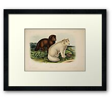 James Audubon - Quadrupeds of North America V3 1851-1854  Arctic Fox Framed Print