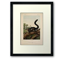 James Audubon - Quadrupeds of North America V3 1851-1854  Dusky Squirrel Framed Print
