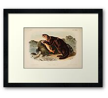 James Audubon - Quadrupeds of North America V3 1851-1854  Sea Otter Framed Print