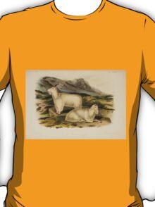 James Audubon - Quadrupeds of North America V3 1851-1854  Rocky Mountain Goat T-Shirt